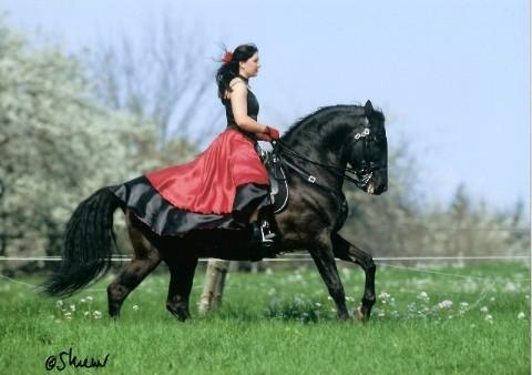 reitunterricht ausbildung von reiter und pferd reiten f hlen verstehen. Black Bedroom Furniture Sets. Home Design Ideas